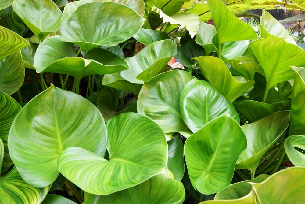 các loại lá tự nhiên cũng có những chất tốt bảo vệ sức khỏe